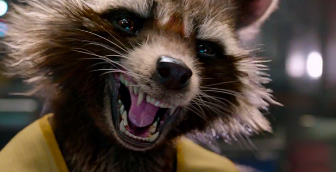 2014: Year of the Raccoon
